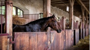 Learning Business Leadership In The Company Of Horses