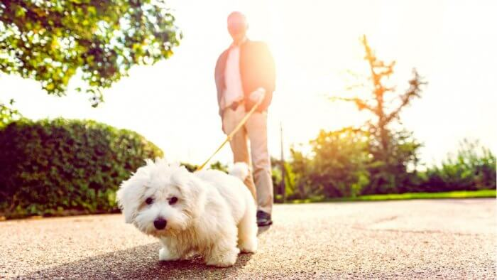 7 Ways My Dogs Have Made Me More Successful