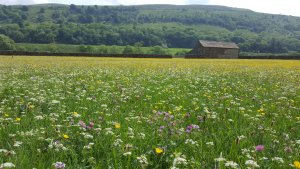 Call To Pay Farmers £3bn A Year To Deliver For Wildlife And Climate