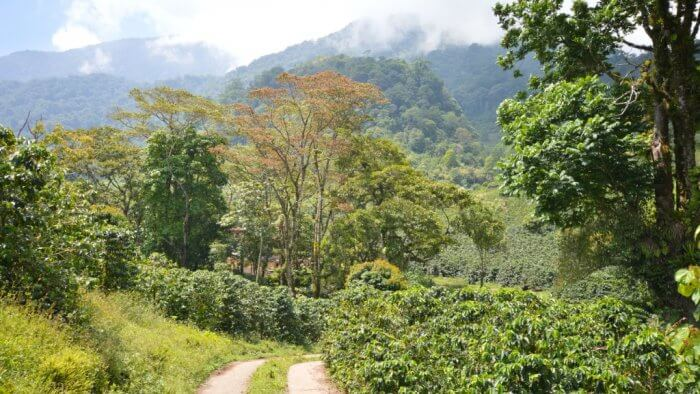 How Is Climate Change Affecting Coffee Production?