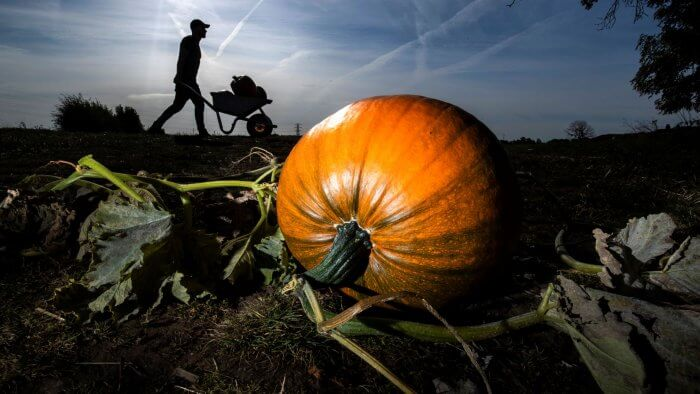 Shoppers Planning For Halloween Rather Than No-Deal Brexit, Figures Suggest