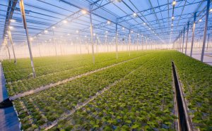 The Pros And Cons Of Hydroponic Farming